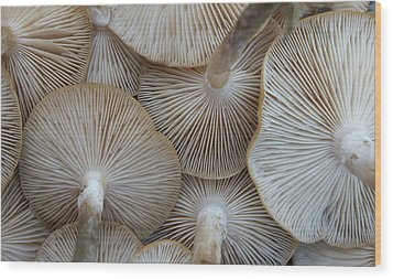 Underside Of Mushrooms Wood Print by Greg Adams Photography