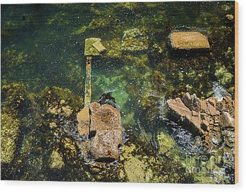 Wood Print featuring the photograph Underwater Art At Cannery Row by Susan Wiedmann