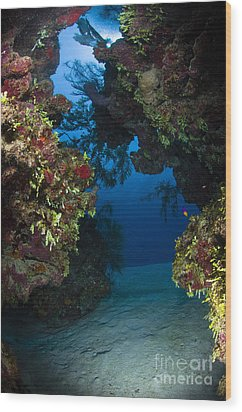 Underwater Crevice Through A Coral Wood Print by Todd Winner