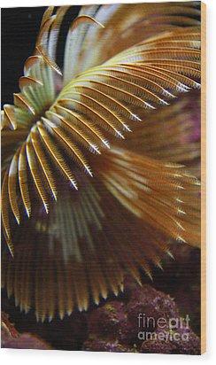 Underwater Feathers Wood Print