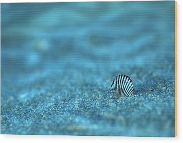 Underwater Seashell - Jersey Shore Wood Print