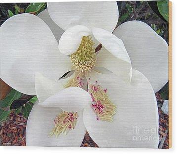 Unfolding Beauty Of Magnolia Wood Print