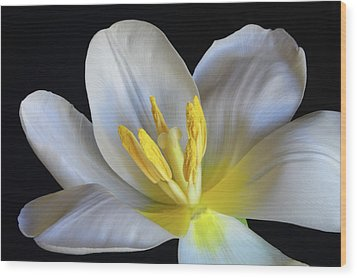 Wood Print featuring the photograph Unfolding Tulip. by Terence Davis
