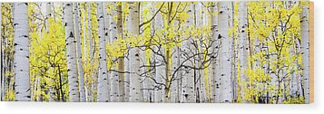 Unititled Aspens No. 6 Wood Print by The Forests Edge Photography - Diane Sandoval