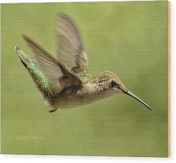 Untitled Hum_bird_one Wood Print