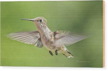 Untitled Hum_bird_three Wood Print