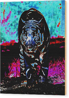 Wood Print featuring the photograph Unusual Tiger On The Prowl by Maggy Marsh