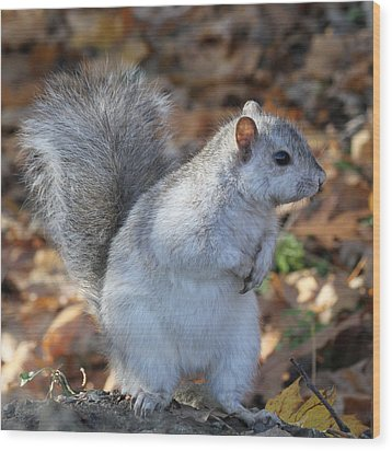 Wood Print featuring the photograph Unusual White And Gray Squirrel by Doris Potter