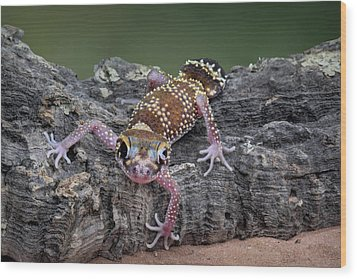 Wood Print featuring the photograph Up And Over - Gecko by Nikolyn McDonald
