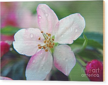Wood Print featuring the photograph Up Close Spring Blossom  by Lila Fisher-Wenzel