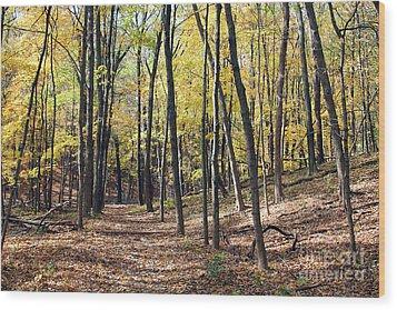 Up The Woodland Trail Wood Print