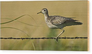 Wood Print featuring the photograph Uplland Sandpiper by Don Durfee