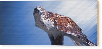 Upon His Perch Wood Print by Greg Slocum