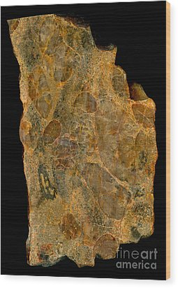 Uranium Ore Conglomerate Wood Print by Ted Kinsman