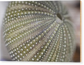 Urchin Texture Wood Print by Laura George