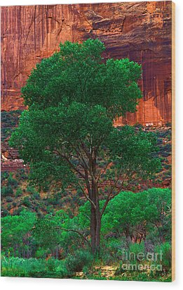 Utah - Cottonwood Wood Print by Terry Elniski