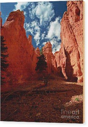 Utah - Bryce Canyon Wood Print by Terry Elniski