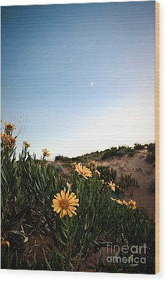 Utah Coral Sand Dune Flowers Wood Print by Ryan Kelly
