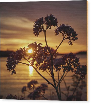 Valerian Sunset Wood Print