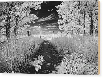 Valley Of Light Wood Print by Dan Jurak