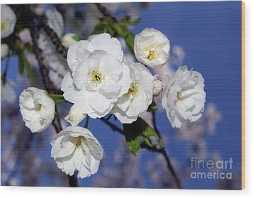 Wood Print featuring the photograph Vancouver 2017 Spring Time Cherry Blossoms - 1 by Terry Elniski