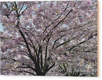 Wood Print featuring the photograph Vancouver 2017 Spring Time Cherry Blossoms - 10 by Terry Elniski