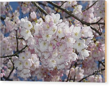Wood Print featuring the photograph Vancouver 2017 Spring Time Cherry Blossoms - 6 by Terry Elniski