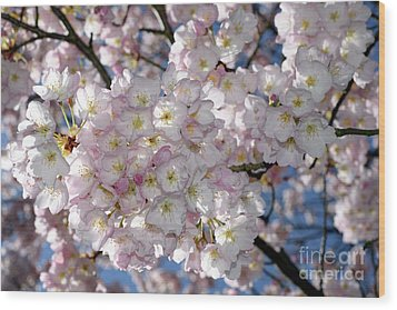 Wood Print featuring the photograph Vancouver 2017 Spring Time Cherry Blossoms - 8 by Terry Elniski