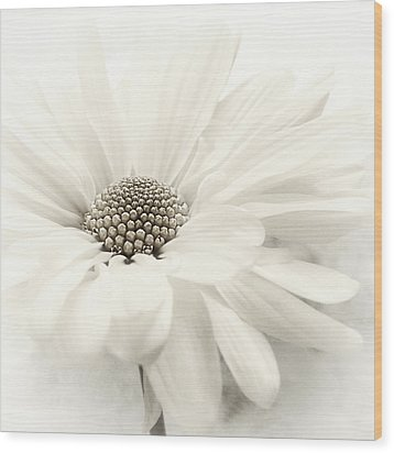 Wood Print featuring the photograph Vanilla Ice by Darlene Kwiatkowski