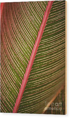 Variegated Ti-leaf 2 Wood Print by Ron Dahlquist - Printscapes