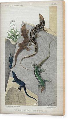 Varieties Of Wall Lizard Wood Print by Jacques von Bedriaga