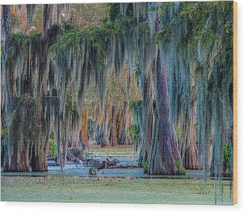 Unveiling The Secrets Of Da Swamp At Cypress Island Preserve Wood Print by Kimo Fernandez