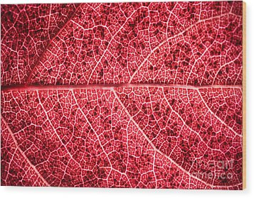 Veins In A Red Autumn Leaf Wood Print by Ryan Kelly