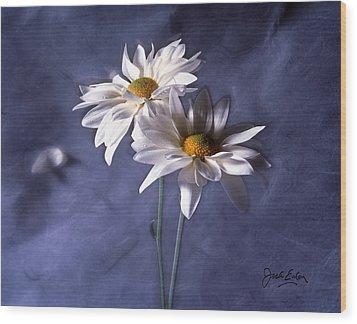 Velvet Daisies Wood Print by Jack Eadon