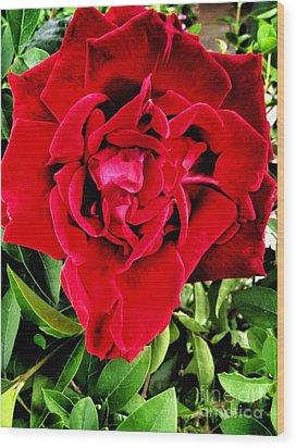Velvet Red Rose Wood Print
