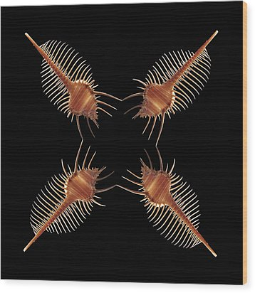 Venus Comb Geometric Wood Print