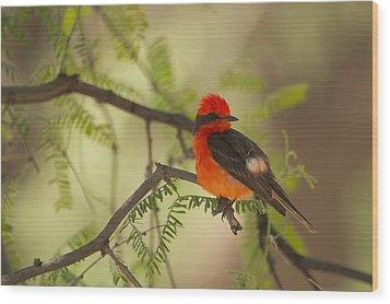 Vermilion Wood Print