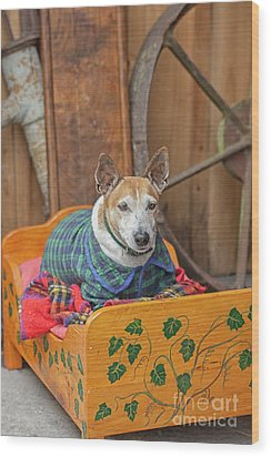 Wood Print featuring the photograph Very Old Pet Dog In Clothes On Own Bed by Patricia Hofmeester
