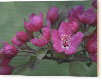 Wood Print featuring the photograph Vibrant Blooms by Ann Bridges