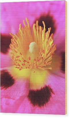 Wood Print featuring the photograph Vibrant Cistus Heart. by Terence Davis
