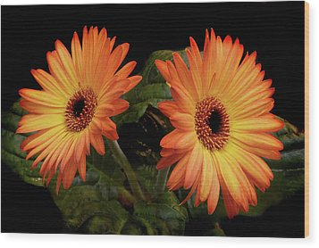 Wood Print featuring the photograph Vibrant Gerbera Daisies by Terence Davis