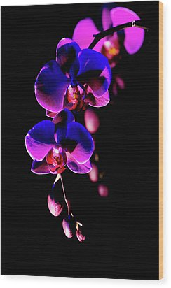 Wood Print featuring the photograph Vibrant Orchids by Ann Bridges