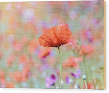 Wood Print featuring the photograph Vibrant Poppies In A Field by Marion McCristall