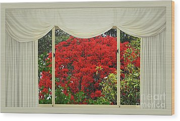 Wood Print featuring the photograph Vibrant Red Blossoms Window View By Kaye Menner by Kaye Menner