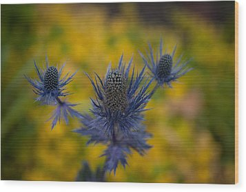 Vibrant Thistles Wood Print by Mike Reid