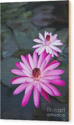 Vibrant Waterlilies Wood Print by Dana Edmunds - Printscapes