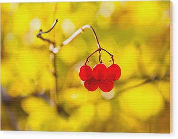 Wood Print featuring the photograph Viburnum Berries - Natural Olympic Emblem by Alexander Senin