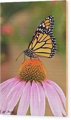 Monarch Butterfly On A Purple Coneflower Wood Print by Jeff Goulden