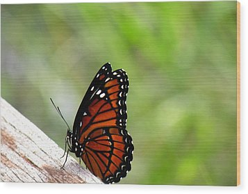 Wood Print featuring the photograph Viceroy Butterfly Side View by Rosalie Scanlon