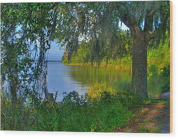 View Under The Spanish Moss Wood Print by Brian Wright